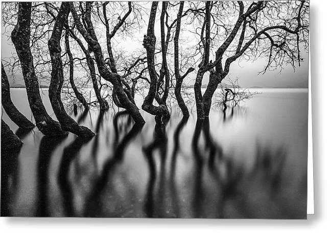 Submerging Trees Greeting Card by John Farnan