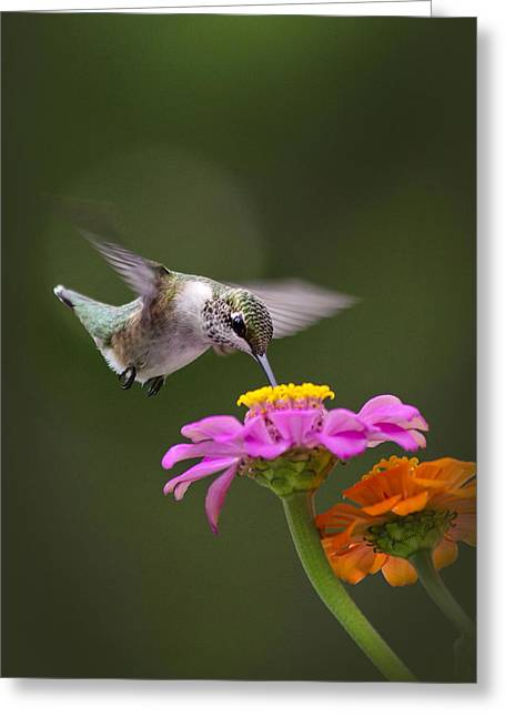 Flying Animal Greeting Cards - Summer Breeze Greeting Card by Christina Rollo