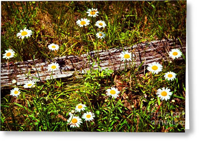 Split Rail Fence Greeting Cards - Summer Flowers on the Blue Ridge Parkway 7653 Greeting Card by Dan Carmichael