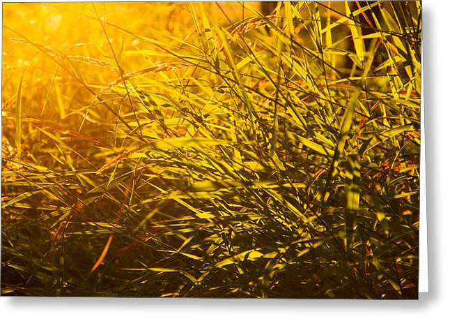 Sauvie Island Greeting Cards - Summer light Greeting Card by Kunal Mehra