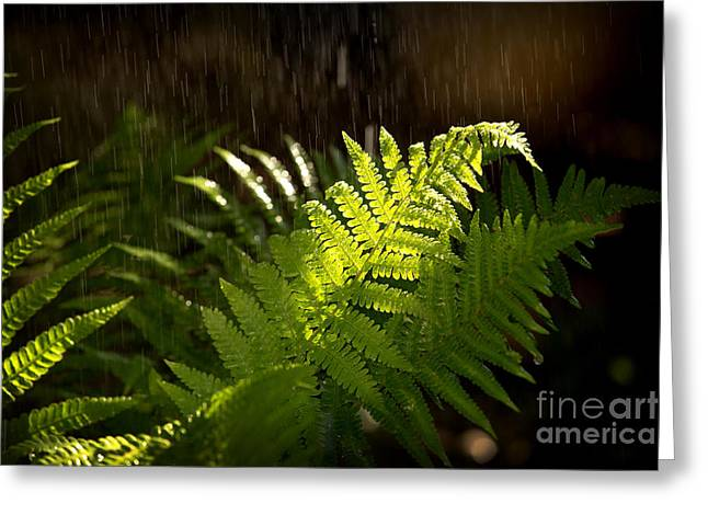 Fern Greeting Cards - Summer rain Greeting Card by Jane Rix