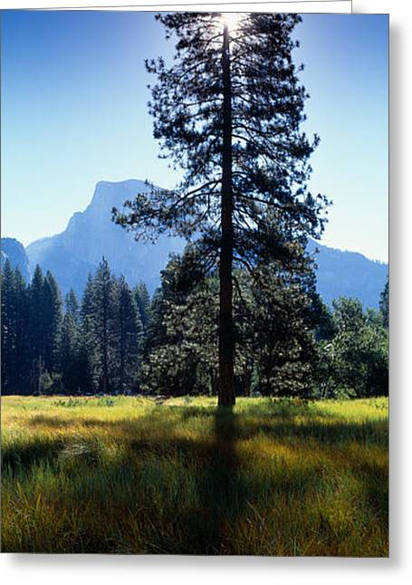 Fantasy World Greeting Cards - Sun Behind Pine Tree, Half Dome Greeting Card by Panoramic Images