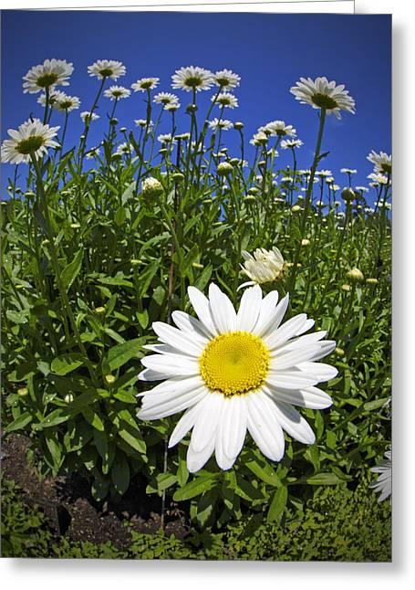Daisy Greeting Cards - Sunbathing Greeting Card by Rick Berk