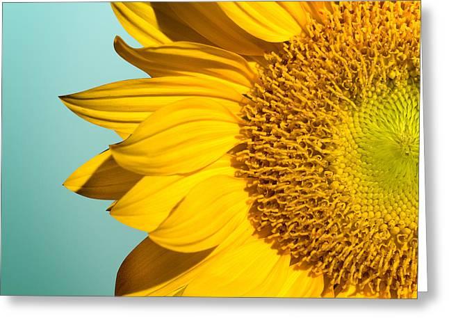 Sunflower Greeting Card by Mark Ashkenazi