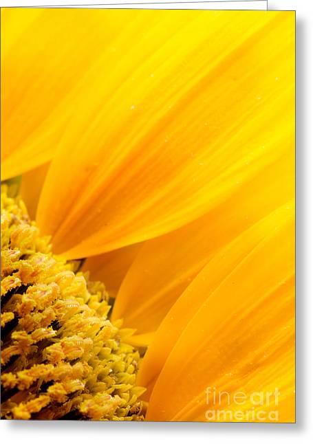 Mythja Digital Art Greeting Cards - Sunflower petals Greeting Card by Mythja  Photography