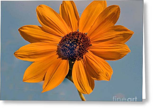 Haybales Greeting Cards - Sunflower Greeting Card by Robert Bales