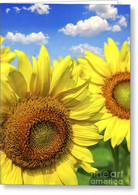 Cheerful Photographs Greeting Cards - Sunflowers Greeting Card by Elena Elisseeva