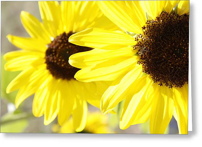 Outdoor Garden Greeting Cards - Sunflowers  Greeting Card by Les Cunliffe