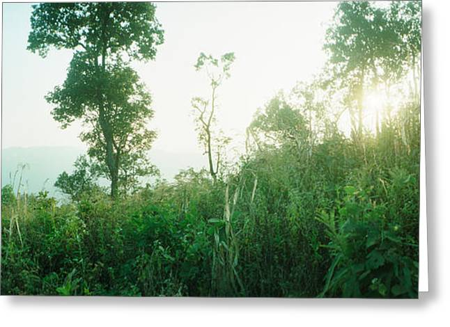 Tropical Vegetation Greeting Cards - Sunlight Coming Through The Trees Greeting Card by Panoramic Images