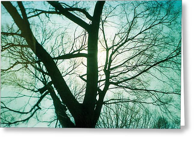 Prospects Greeting Cards - Sunlight Shining Through A Bare Tree Greeting Card by Panoramic Images
