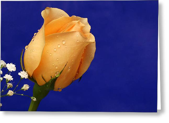 Norkum Greeting Cards - Sunny Greeting Card by Doug Norkum