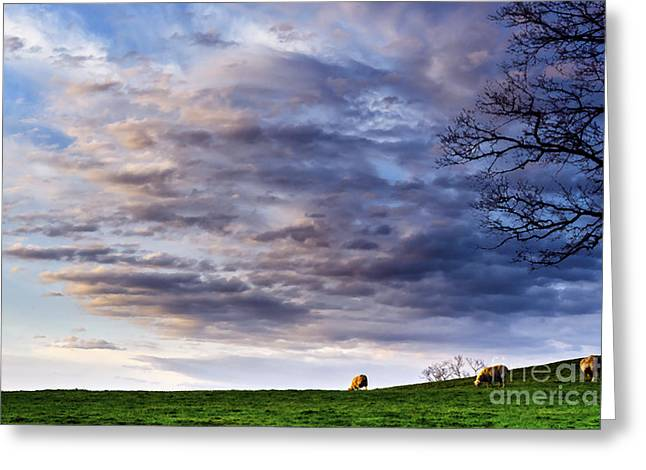 Nature Scene Digital Art Greeting Cards - Sunrise Grazing Greeting Card by Thomas R Fletcher