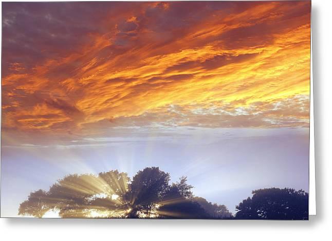 Woodland Scenes Greeting Cards - Sunrise Greeting Card by Les Cunliffe