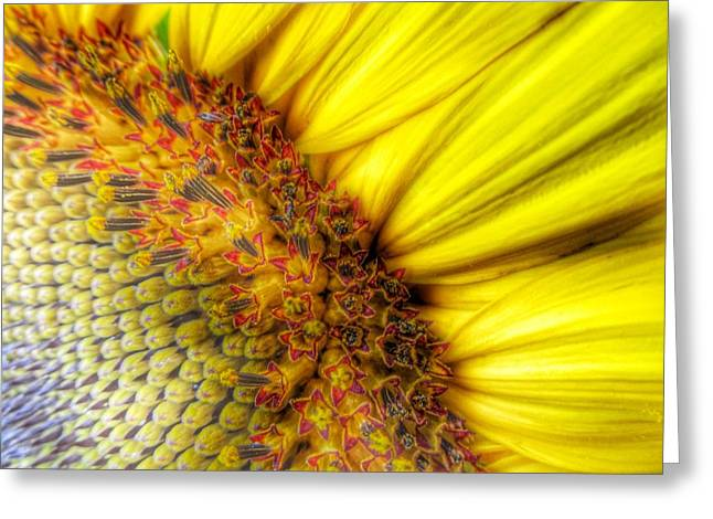 Perspective View Greeting Cards - Sunrise Greeting Card by Marianna Mills