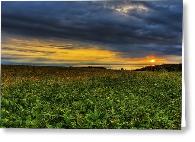 Green Beans Greeting Cards - Sunrise Over the Bean Field Greeting Card by Larry Helms