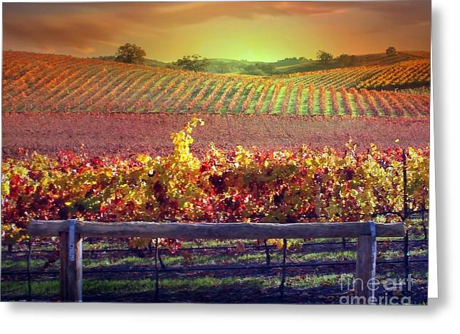 Zinfandel Greeting Cards - Sunrise Vineyard Greeting Card by Stephanie Laird