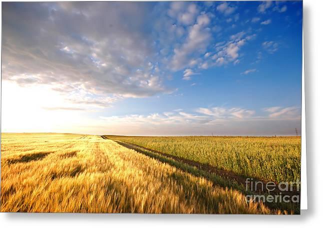 Sunset Field Greeting Card by Michal Bednarek