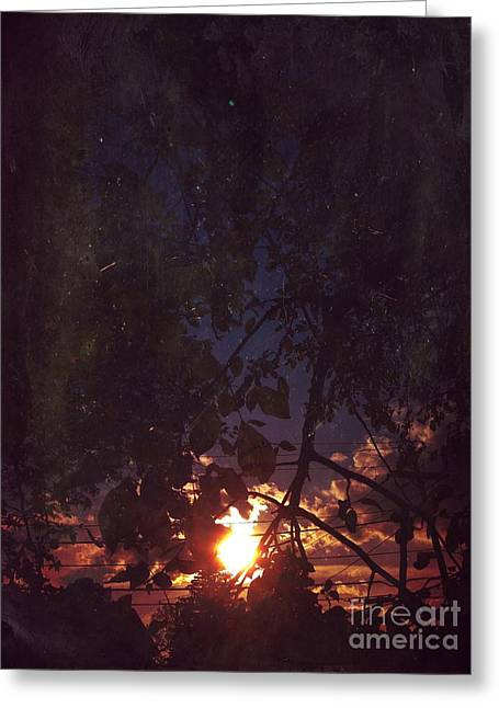 Sunset Light Greeting Cards - Sunset Greeting Card by HD Connelly