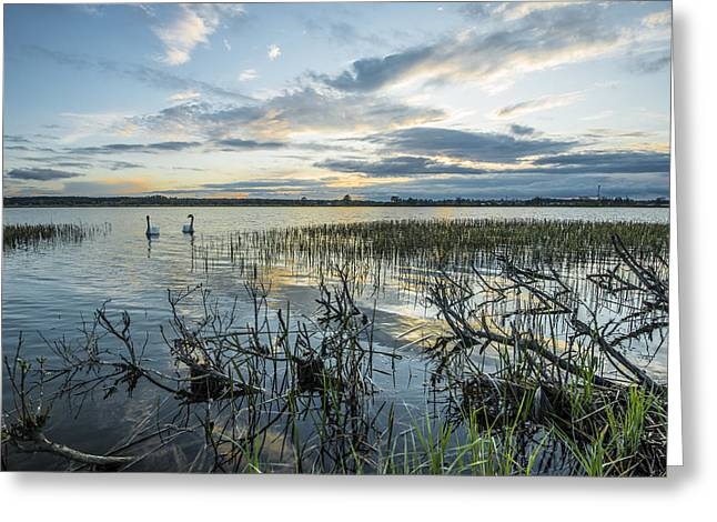 Swans... Photographs Greeting Cards - Sunset Greeting Card by Jaroslaw Grudzinski