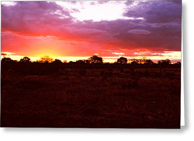 Savannah Nature Photography Greeting Cards - Sunset Over The Savannah Plains, Kruger Greeting Card by Panoramic Images