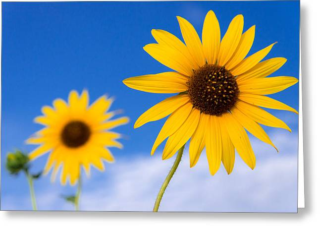 Yellow Sunflower Greeting Cards - Sunshine Greeting Card by Chad Dutson