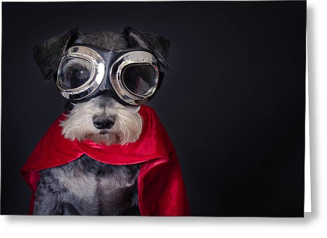 Cute Schnauzer Greeting Cards - Super Dog Greeting Card by Mesha Zelkovich