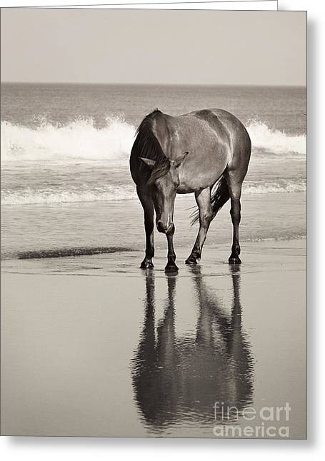Filly Art Greeting Cards - Surf Snooze Greeting Card by Lyndsey Warren
