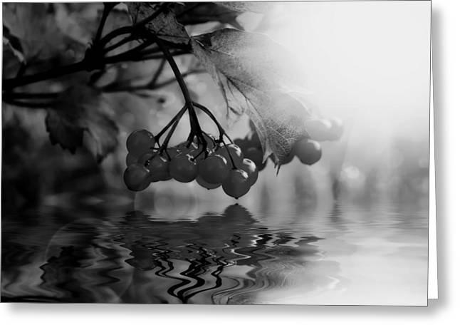 Black Berries Greeting Cards - Surreal Cherries Greeting Card by Mountain Dreams