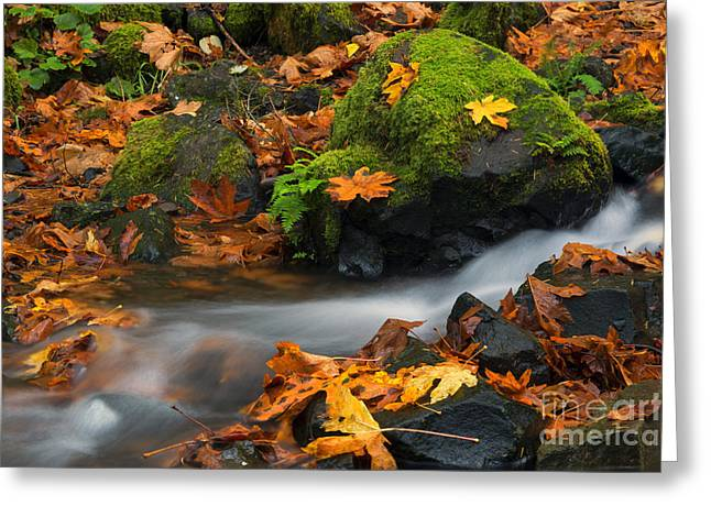 Fall Creek Greeting Cards - Surrounded by the Season  Greeting Card by Mike Dawson