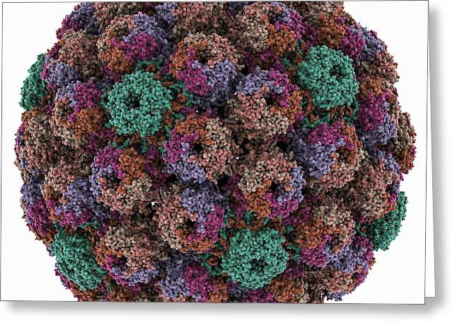 Carcinogenic Greeting Cards - SV40 virus capsid, molecular model Greeting Card by Science Photo Library