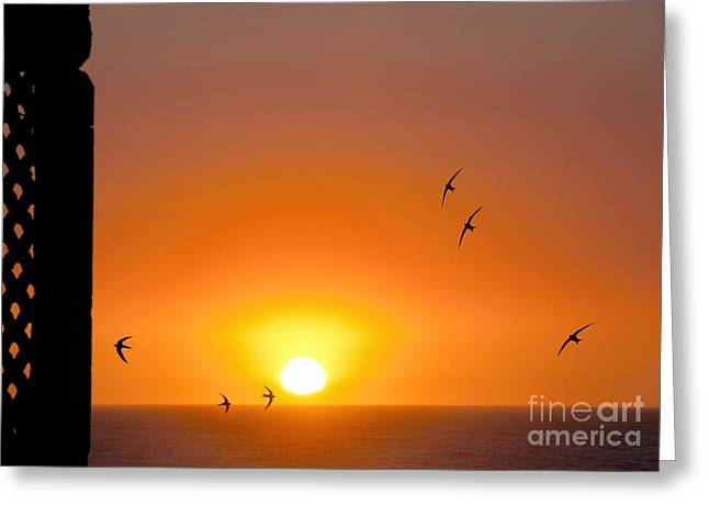 Hirundo Greeting Cards - Swallows Flying At Sunset Greeting Card by Laurent Laveder