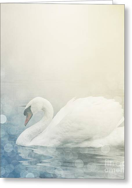 Misty. Pyrography Greeting Cards - Swan Greeting Card by Jelena Jovanovic