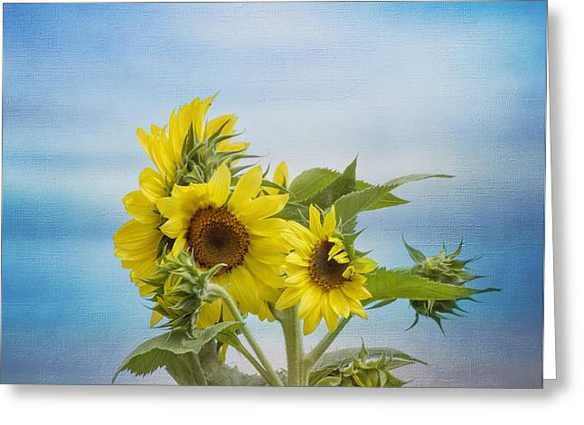 Yellow Sunflower Greeting Cards - Swaying in the Breeze Greeting Card by Kim Hojnacki