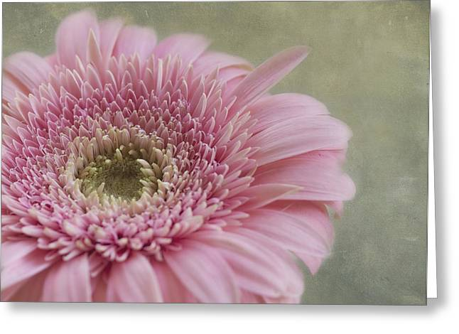 Textured Floral Greeting Cards - Sweetness Greeting Card by Kim Hojnacki