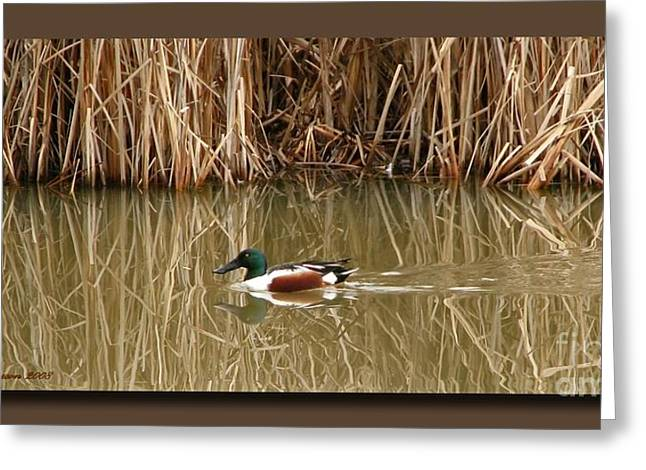 Matting Greeting Cards - Swimming Among The Reeds Greeting Card by Chris Anderson