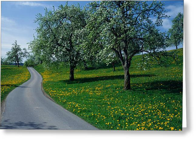 Flower Blossom Greeting Cards - Switzerland, Zug, Road Greeting Card by Panoramic Images