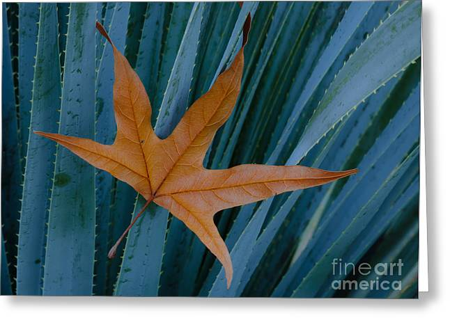 American Sycamore Greeting Cards - Sycamore Leaf And Sotol Plant Greeting Card by John Shaw