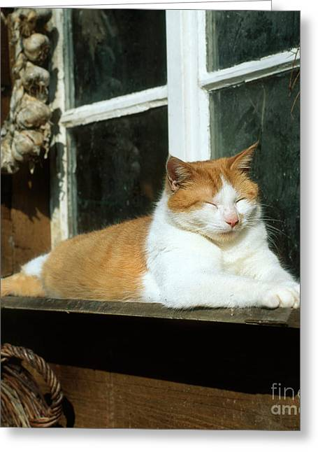 Window Ledge Photographs Greeting Cards - Tabby Cat Greeting Card by Hans Reinhard