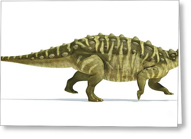 Ankylosaurus Digital Greeting Cards - Talarurus Dinosaur On White Background Greeting Card by Leonello Calvetti