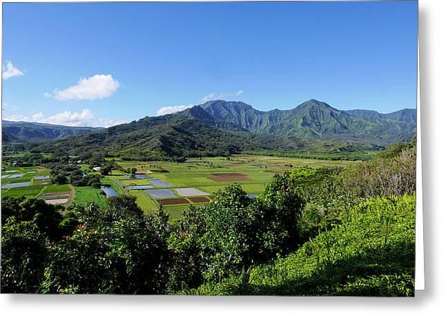 Taro Field, Hanalei Valley, Lookout Greeting Card by Douglas Peebles