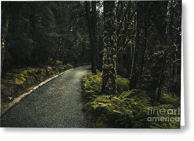 Cradle-mountain Greeting Cards - Tasmanian road landscape in dense country forest Greeting Card by Ryan Jorgensen