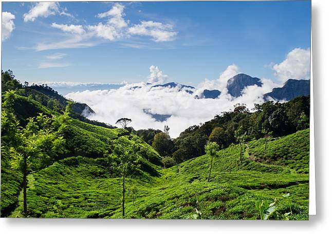 Asien Greeting Cards - Tea Plantation In South India  Greeting Card by Leander Nardin
