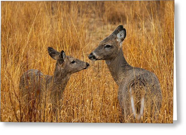 Metro Park Greeting Cards - Tender Moment  Greeting Card by James Marvin Phelps