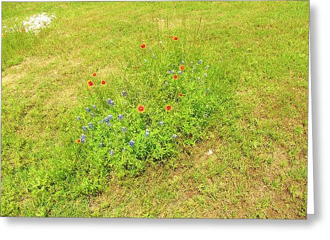 Wild Flowers Of Texas Greeting Cards - Texas Wild Flowers  Greeting Card by Donna Wilson