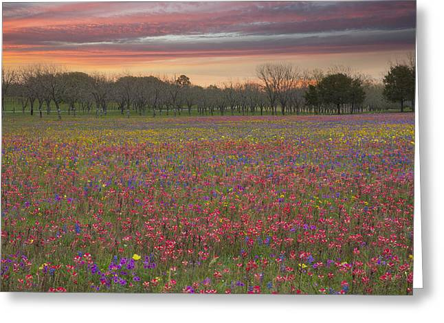 Wildflower Photos Greeting Cards - Texas Wildflower Images - Bluebonnets and Paintbrush on Church R Greeting Card by Rob Greebon