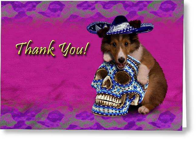 Thank You Sheltie Puppy Greeting Card by Jeanette K