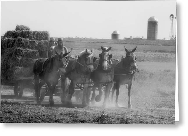 Amish Farms Greeting Cards - The Amish Way of Life Greeting Card by mountain Dreams