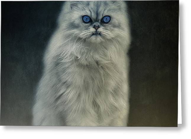 Cat Picture Greeting Cards - The Cat Greeting Card by Angela Doelling AD DESIGN Photo and PhotoArt