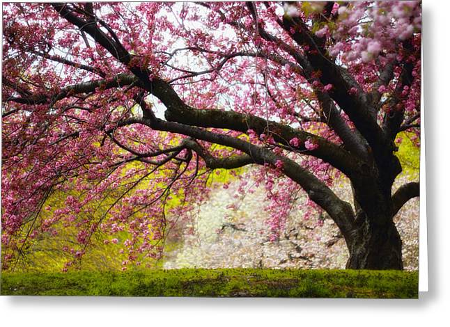 Orchard Greeting Cards - The Cherry Tree Greeting Card by Jessica Jenney