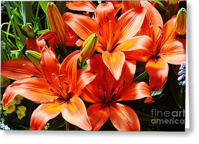 Enhanced Greeting Cards - The Color Orange Greeting Card by Kathleen Struckle